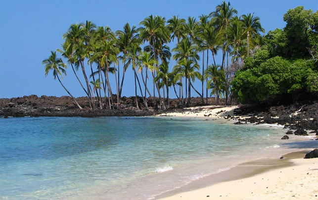 Kona beach with palm trees
